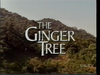 The Ginger Tree DVD - (1989)